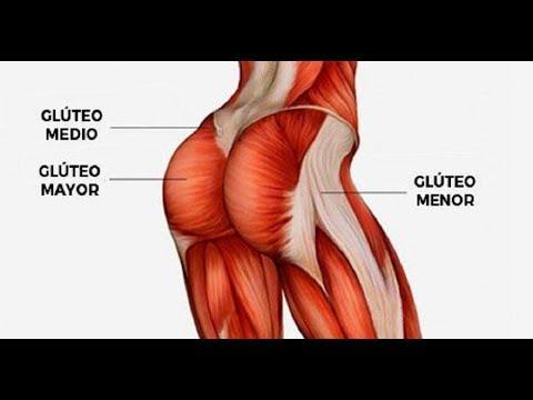 Como construir os músculos dos glúteos